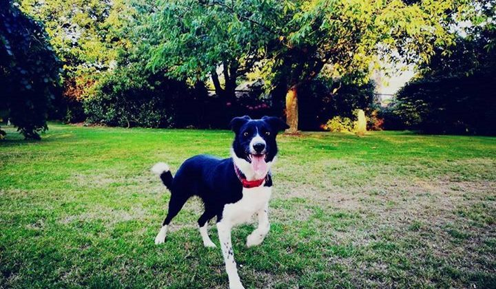 The Vicar's Dog has gone missing.  Last seen at the Vicarage on Canowie Road at 9pm ish last night.  There was a sighting on Redland Green about 10pm last night.  She's wearing a red collar with an RNLI bandana on it.  If you've seen a black and white short coated border collie (she's called Joan) please phone Emma on 07974 658619